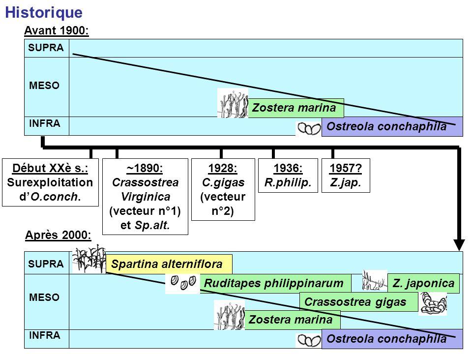 Production primaire : Estimation de laire occupée : images par satellite ou photographies aériennes.