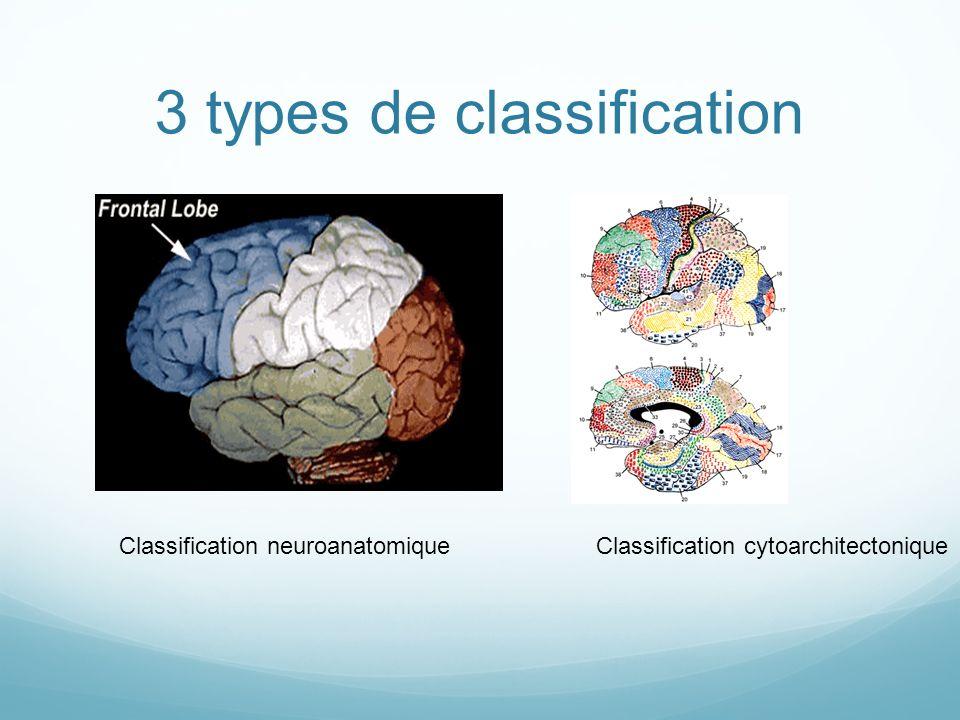 Classification neuroanatomiqueClassification cytoarchitectonique 3 types de classification