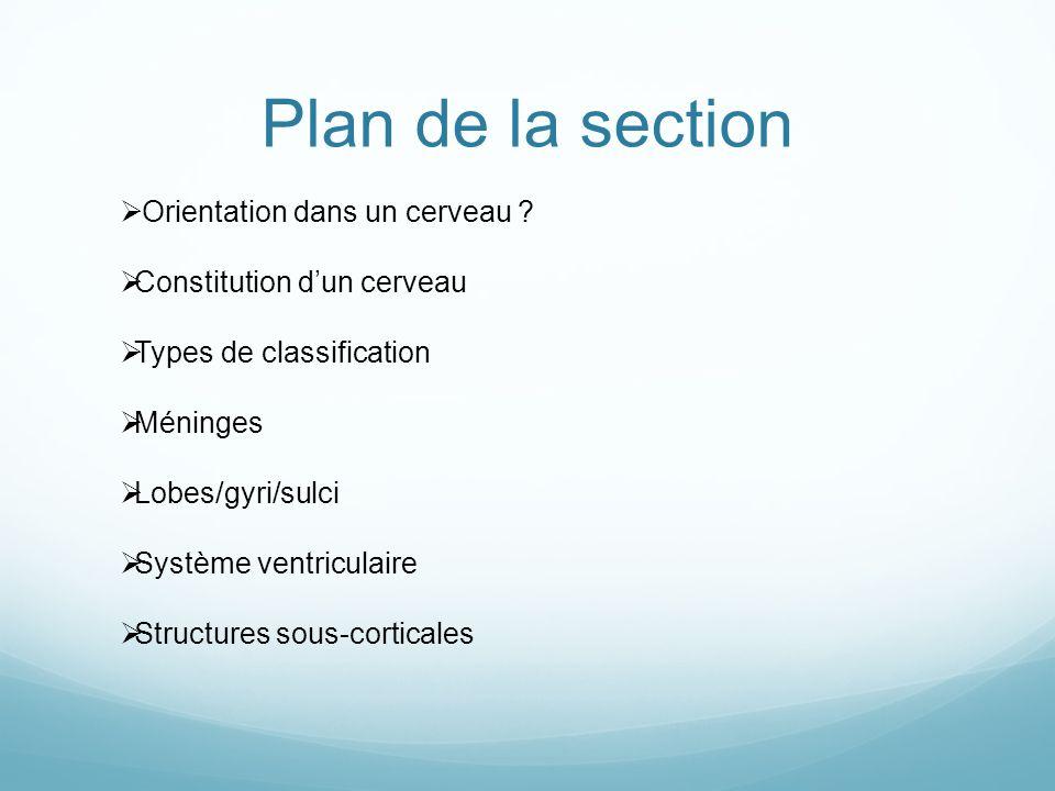 Plan de la section Orientation dans un cerveau ? Constitution dun cerveau Types de classification Méninges Lobes/gyri/sulci Système ventriculaire Stru