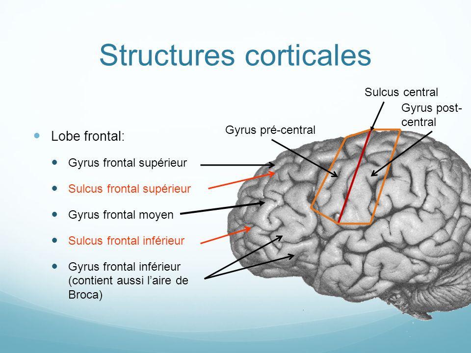 Structures corticales Lobe frontal: Gyrus frontal supérieur Sulcus frontal supérieur Gyrus frontal moyen Sulcus frontal inférieur Gyrus frontal inférieur (contient aussi laire de Broca) Sulcus central Gyrus pré-central Gyrus post- central