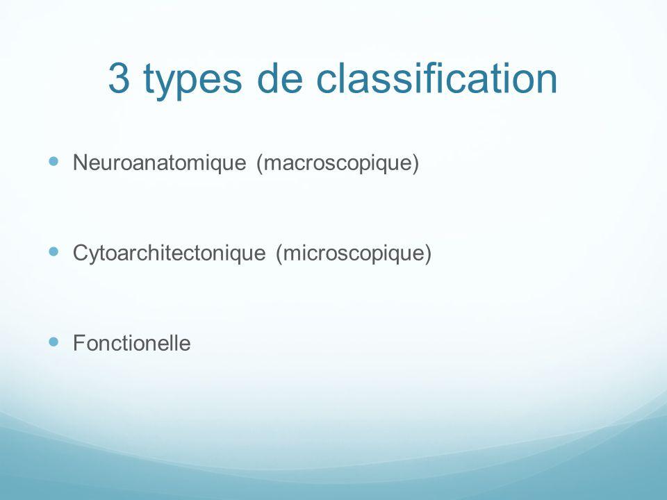 3 types de classification Neuroanatomique (macroscopique) Cytoarchitectonique (microscopique) Fonctionelle