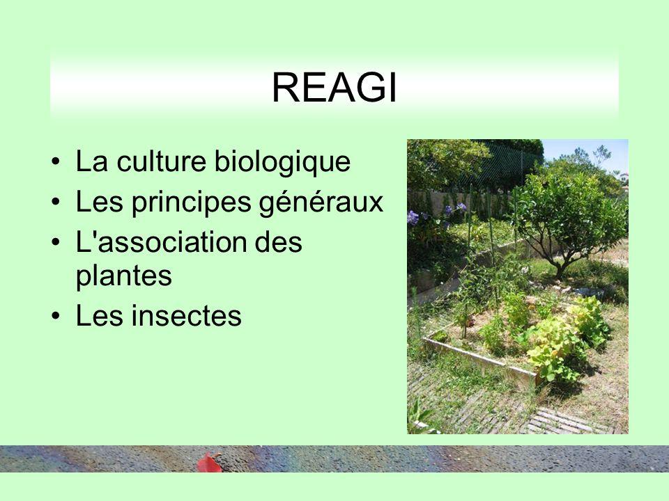 La culture biologique Les principes généraux L association des plantes Les insectes