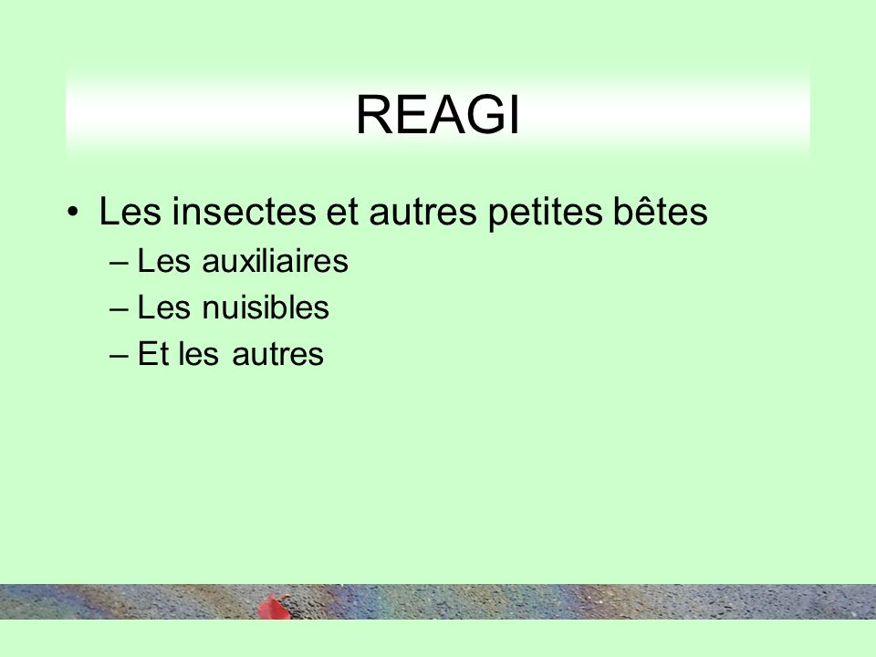 REAGI Les insectes et autres petites bêtes –Les auxiliaires –Les nuisibles –Et les autres