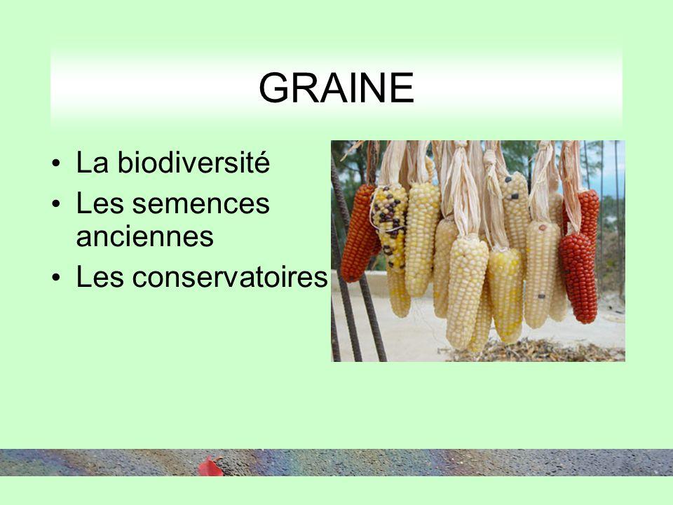 La biodiversité Les semences anciennes Les conservatoires