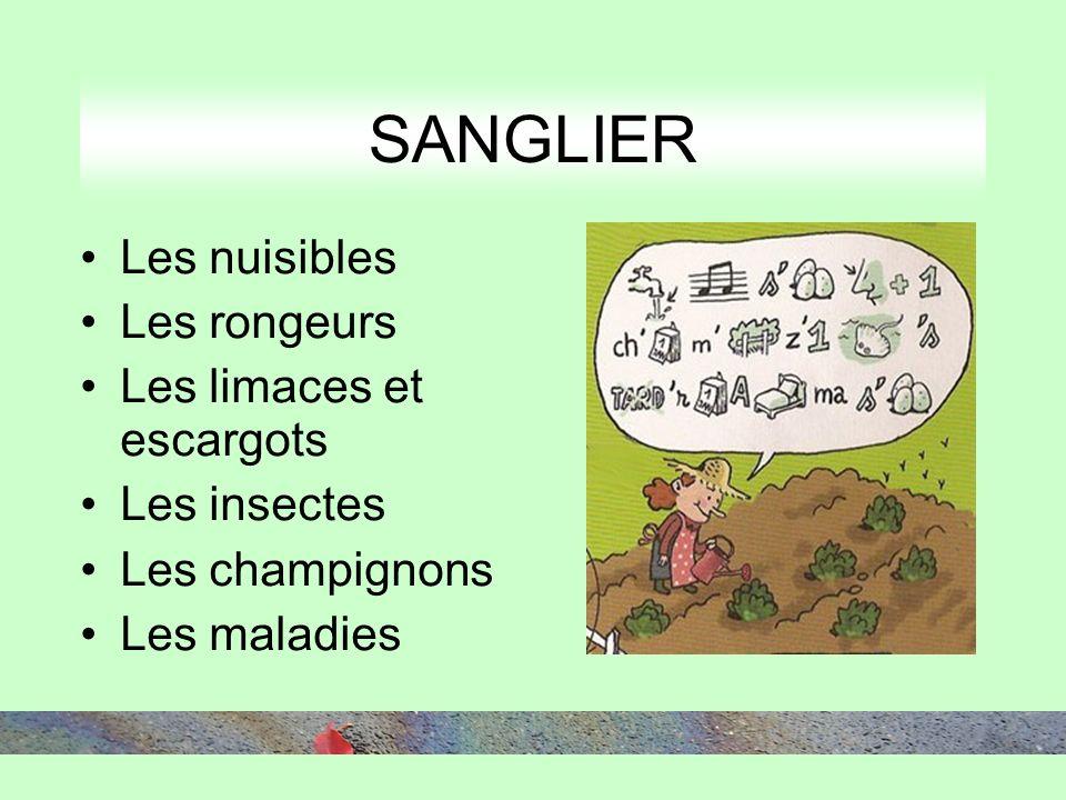 Les nuisibles Les rongeurs Les limaces et escargots Les insectes Les champignons Les maladies