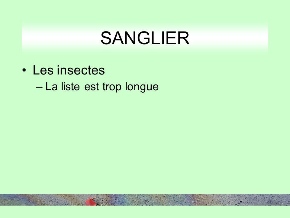 SANGLIER Les insectes –La liste est trop longue