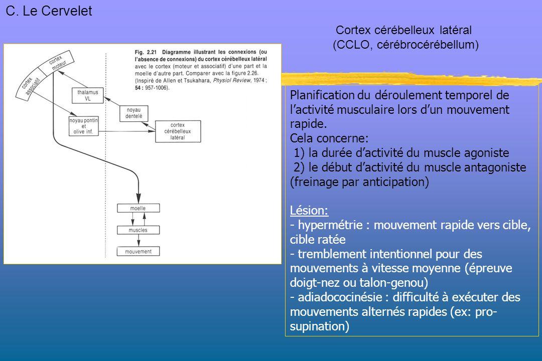 Planification du déroulement temporel de lactivité musculaire lors dun mouvement rapide.
