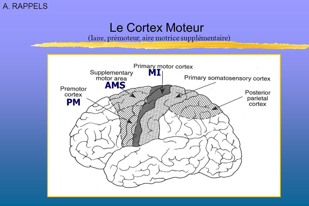 Lésion de SI (somatotopique) - perte de discrimination (intensité et qualité) des stimuli (afférences thalamiques) - perte de localisation tactile - incoordination visuomanuelle par manque dinformation (rétroaction sensorielle insuffisante) - perte de proprioception consciente : perte du sens de position (ataxie sensitive, FNM) SI 3,1,2 SI 3,1,2 SII Lésion de SII (non somatotopique) - incapacités similaires à SI - non adaptation de louverture de la main à la taille de lobjet - non ajustement de la force de la préhension à la texture de lobjet A.