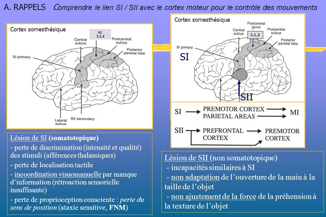 Aires pariétales 3,1,2 Sites de projection La voie corticospinale ou faisceau pyramidal (pour le contrôle du gain des entrées sensorielles) (pour le mouvement) Aires motrices 4,6 A.