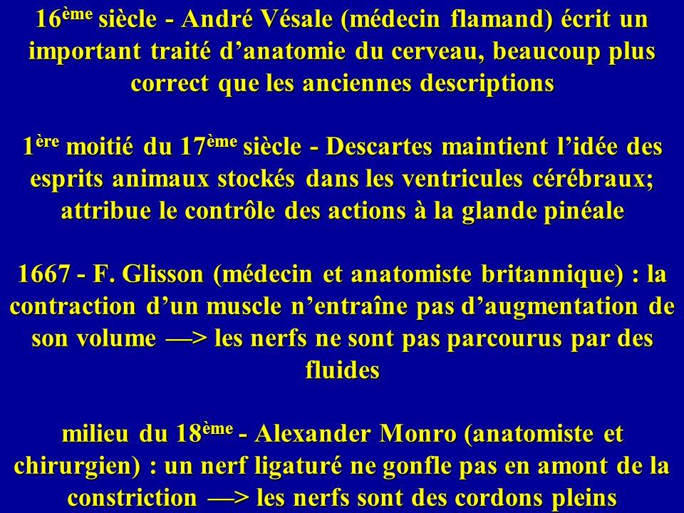 16 ème siècle - André Vésale (médecin flamand) écrit un important traité danatomie du cerveau, beaucoup plus correct que les anciennes descriptions 1