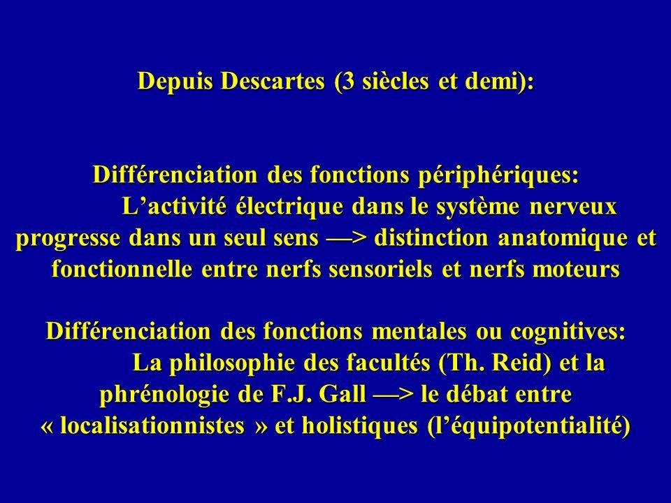 début du 19 ème siècle - Franz Joseph Gall propose lidée dune relation entre fonctions cognitives et régions du cerveau, et que les différentes « facultés » ont des sièges bien localisés dans le cerveau, plus précisément dans le cortex cérébral; na î t lidée dune spécialisation de certaines aires cérébrales pour certaines fonctions 1826 - Johannes Müller (physiologiste) montre que les nerfs transmettent une impulsion nerveuse, électrique à peu près à la même époque - Charles Bell (anatomiste écossais) et François Magendie (physiologiste français) associent les nerfs sensoriels et les nerfs moteurs, respectivement, aux racines dorsales et ventrales de la moelle épinière
