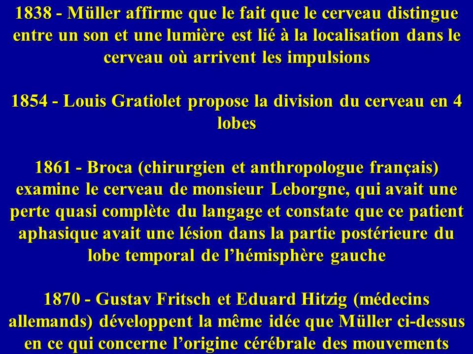 1838 - Müller affirme que le fait que le cerveau distingue entre un son et une lumière est lié à la localisation dans le cerveau où arrivent les impul