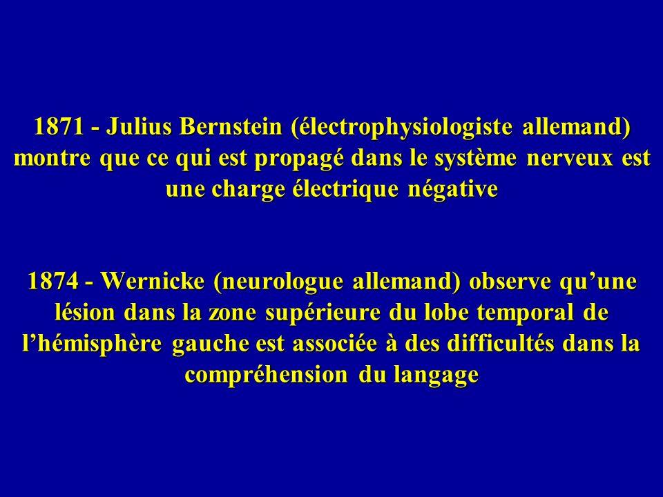 1871 - Julius Bernstein (électrophysiologiste allemand) montre que ce qui est propagé dans le système nerveux est une charge électrique négative 1874
