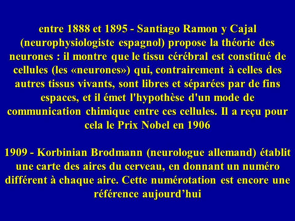 entre 1888 et 1895 - Santiago Ramon y Cajal (neurophysiologiste espagnol) propose la théorie des neurones : il montre que le tissu cérébral est consti