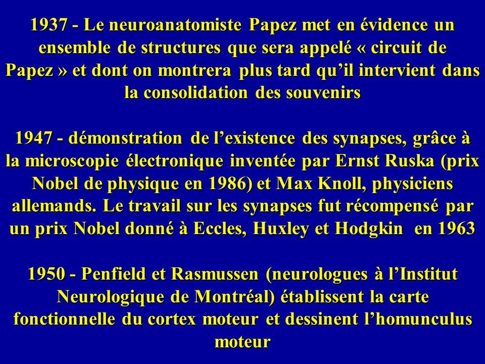 1937 - Le neuroanatomiste Papez met en évidence un ensemble de structures que sera appelé « circuit de Papez » et dont on montrera plus tard quil inte