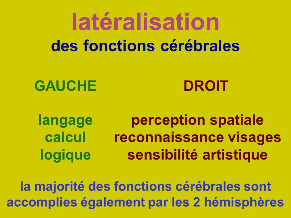 latéralisation des fonctions cérébrales GAUCHEDROIT langage calcul logique perception spatiale reconnaissance visages sensibilité artistique la majori