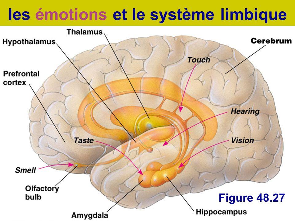Figure 48.27 les émotions et le système limbique