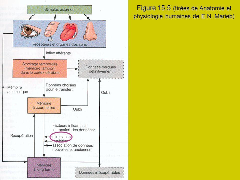 Figure 15.5 (tirées de Anatomie et physiologie humaines de E.N. Marieb)