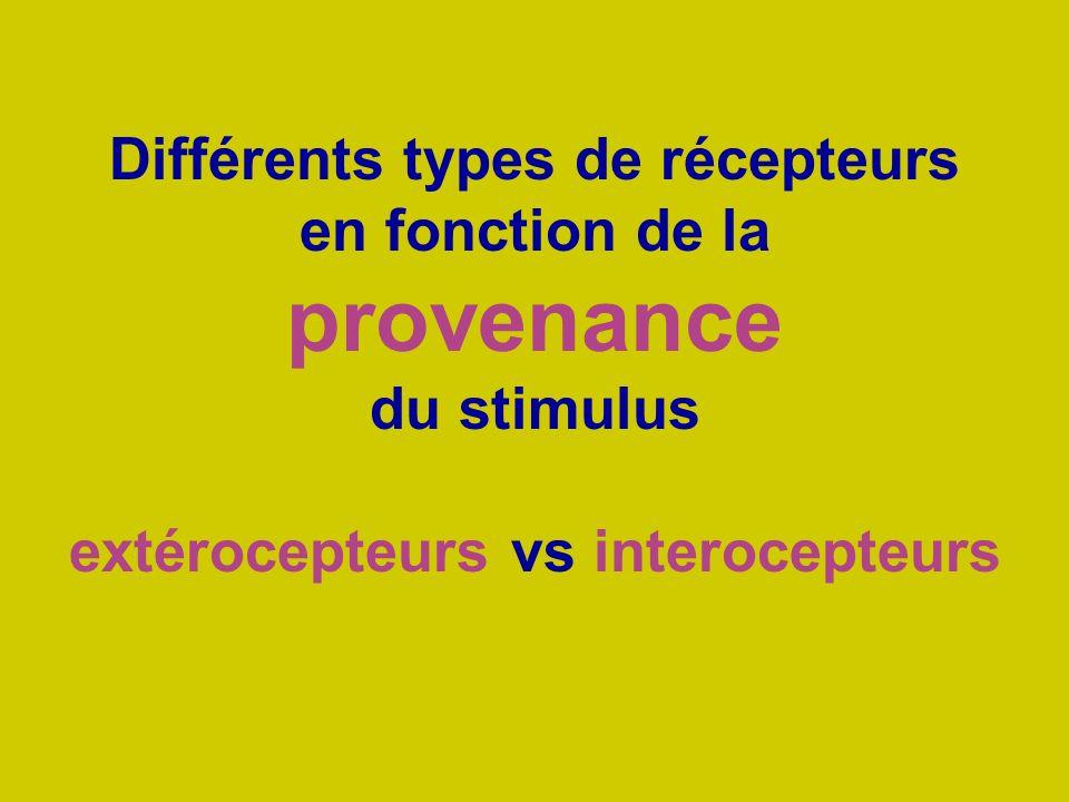 Différents types de récepteurs en fonction de la provenance du stimulus extérocepteurs vs interocepteurs
