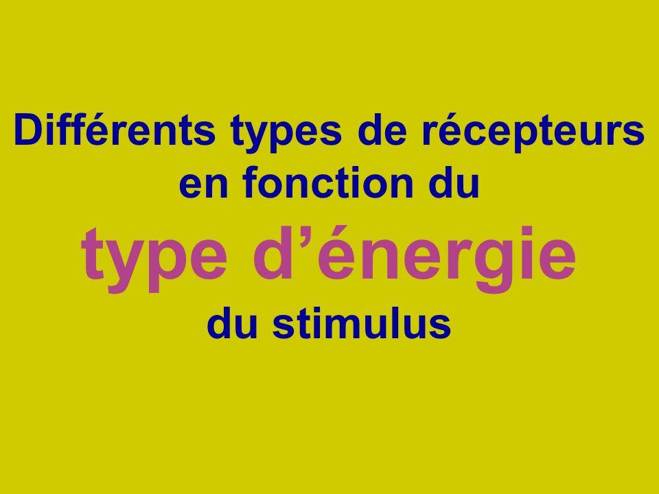 Différents types de récepteurs en fonction du type dénergie du stimulus