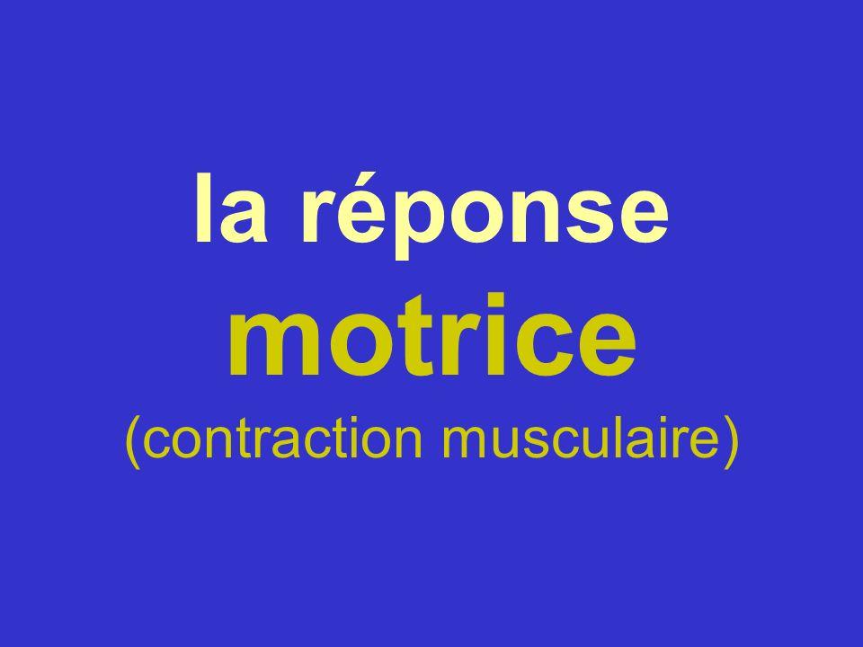 la réponse motrice (contraction musculaire)