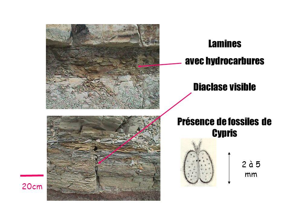 Lamines avec hydrocarbures Diaclase visible Présence de fossiles de Cypris 2 à 5 mm 20cm
