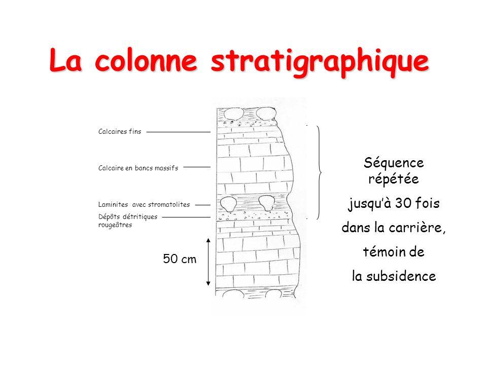 La colonne stratigraphique Calcaires fins Calcaire en bancs massifs Laminites avec stromatolites Dépôts détritiques rougeâtres 50 cm Séquence répétée jusquà 30 fois dans la carrière, témoin de la subsidence