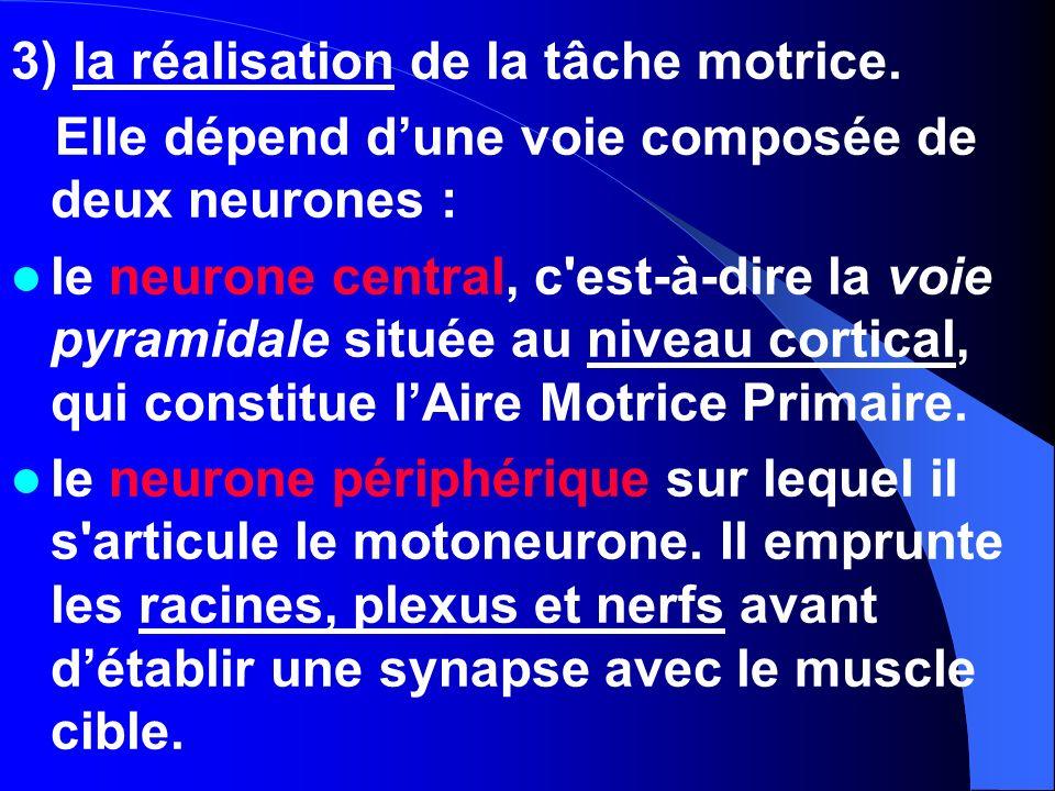 3) la réalisation de la tâche motrice. Elle dépend dune voie composée de deux neurones : le neurone central, c'est-à-dire la voie pyramidale située au