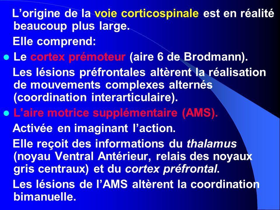 Lorigine de la voie corticospinale est en réalité beaucoup plus large. Elle comprend: Le cortex prémoteur (aire 6 de Brodmann). Les lésions préfrontal