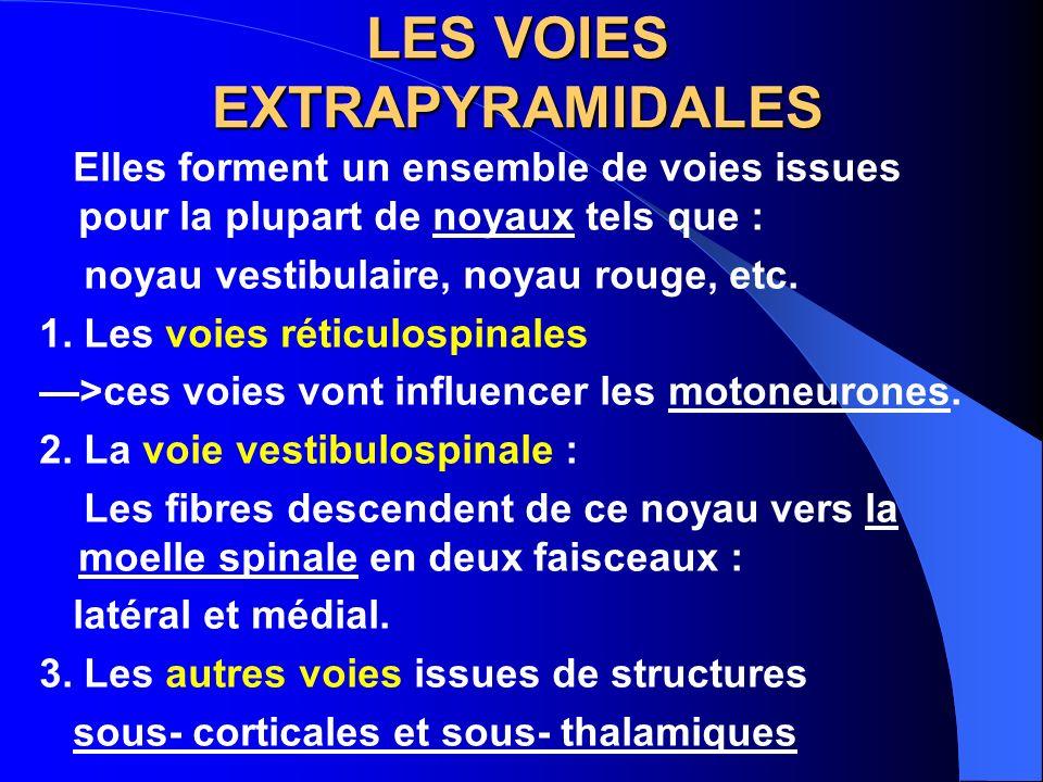 LES VOIES EXTRAPYRAMIDALES Elles forment un ensemble de voies issues pour la plupart de noyaux tels que : noyau vestibulaire, noyau rouge, etc. 1. Les