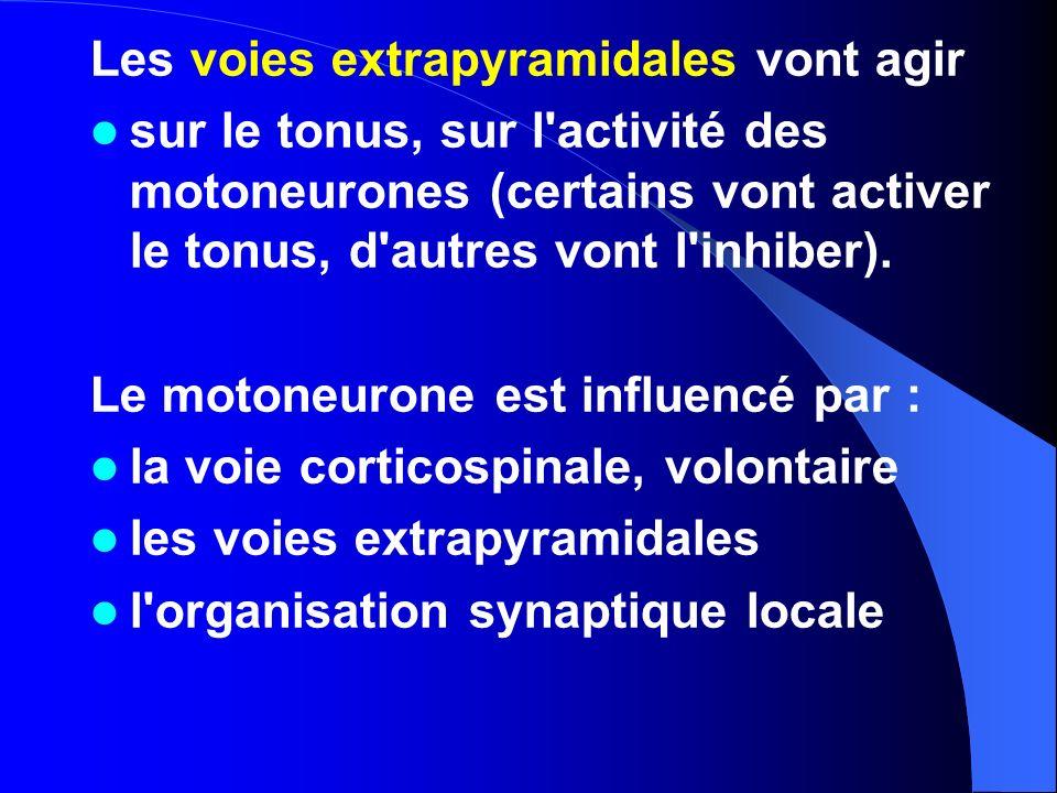 Les voies extrapyramidales vont agir sur le tonus, sur l'activité des motoneurones (certains vont activer le tonus, d'autres vont l'inhiber). Le moton