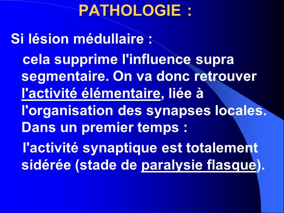 PATHOLOGIE : Si lésion médullaire : cela supprime l'influence supra segmentaire. On va donc retrouver l'activité élémentaire, liée à l'organisation de
