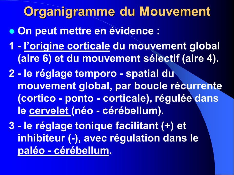 Organigramme du Mouvement On peut mettre en évidence : 1 - lorigine corticale du mouvement global (aire 6) et du mouvement sélectif (aire 4). 2 - le r