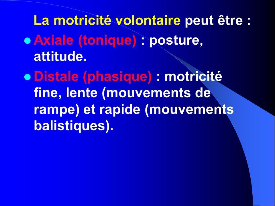 La motricité volontaire peut être : Axiale (tonique) : posture, attitude. Distale (phasique) : motricité fine, lente (mouvements de rampe) et rapide (