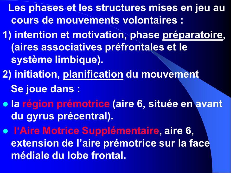Les phases et les structures mises en jeu au cours de mouvements volontaires : 1) intention et motivation, phase préparatoire, (aires associatives pré