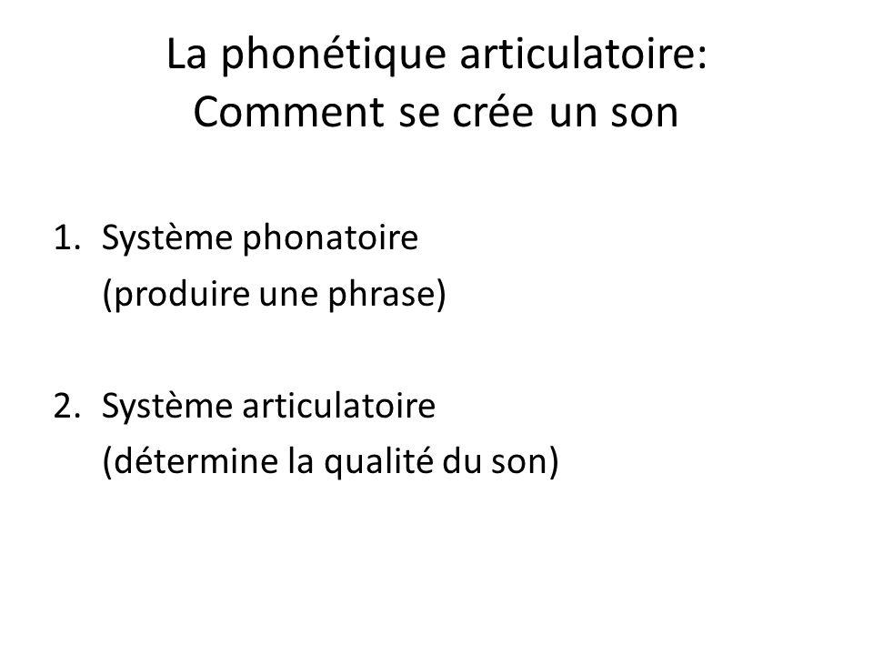 La phonétique articulatoire: Comment se crée un son 1.Système phonatoire (produire une phrase) 2.Système articulatoire (détermine la qualité du son)