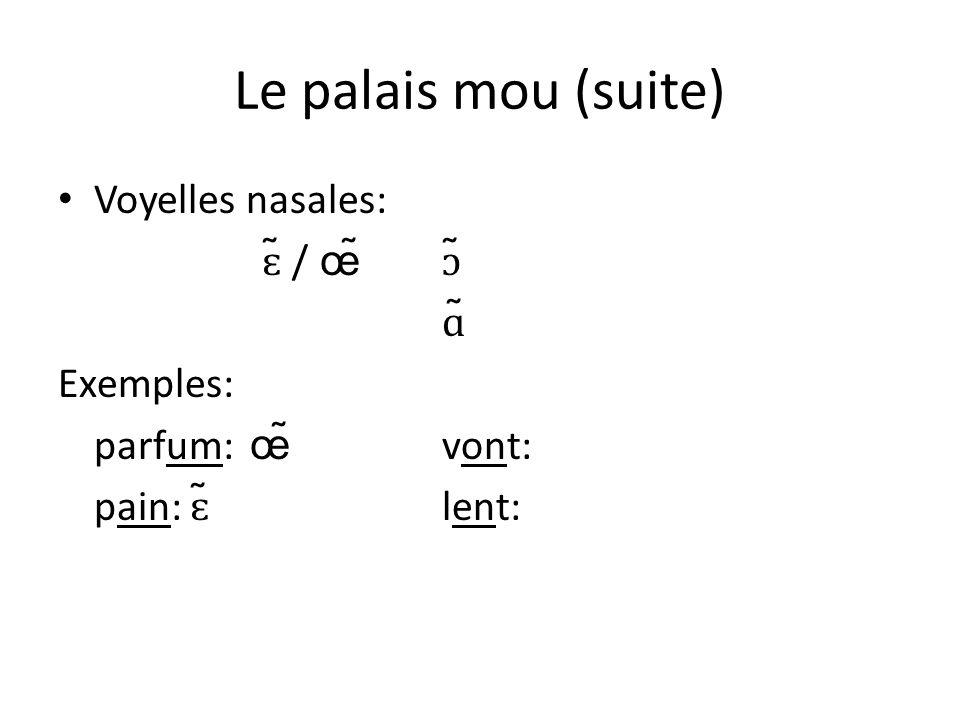 Le palais mou (suite) Voyelles nasales: ɛ̃ / œ̃ɔ̃ ɑ̃ Exemples: parfum: œ̃ vont: pain: ɛ̃ lent: