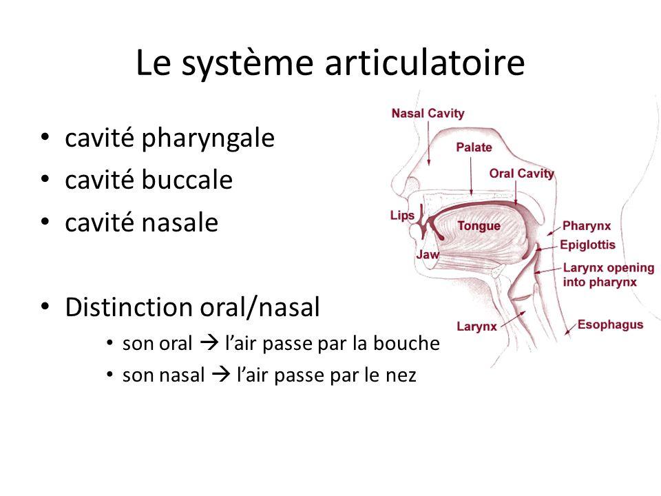 Le système articulatoire cavité pharyngale cavité buccale cavité nasale Distinction oral/nasal son oral lair passe par la bouche son nasal lair passe