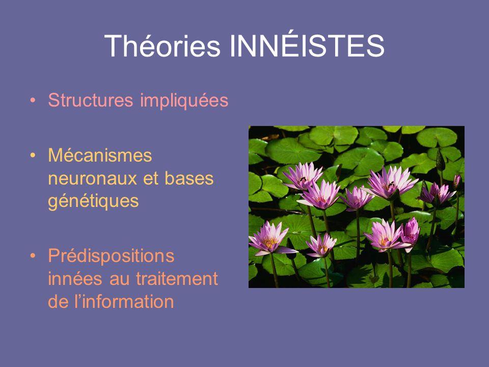 Théories INNÉISTES Structures impliquées Mécanismes neuronaux et bases génétiques Prédispositions innées au traitement de linformation