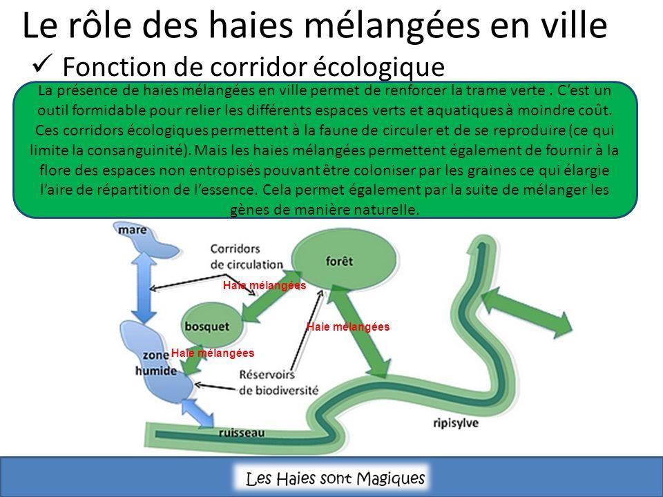 Le rôle des haies mélangées en ville Fonction de corridor écologique La présence de haies mélangées en ville permet de renforcer la trame verte.