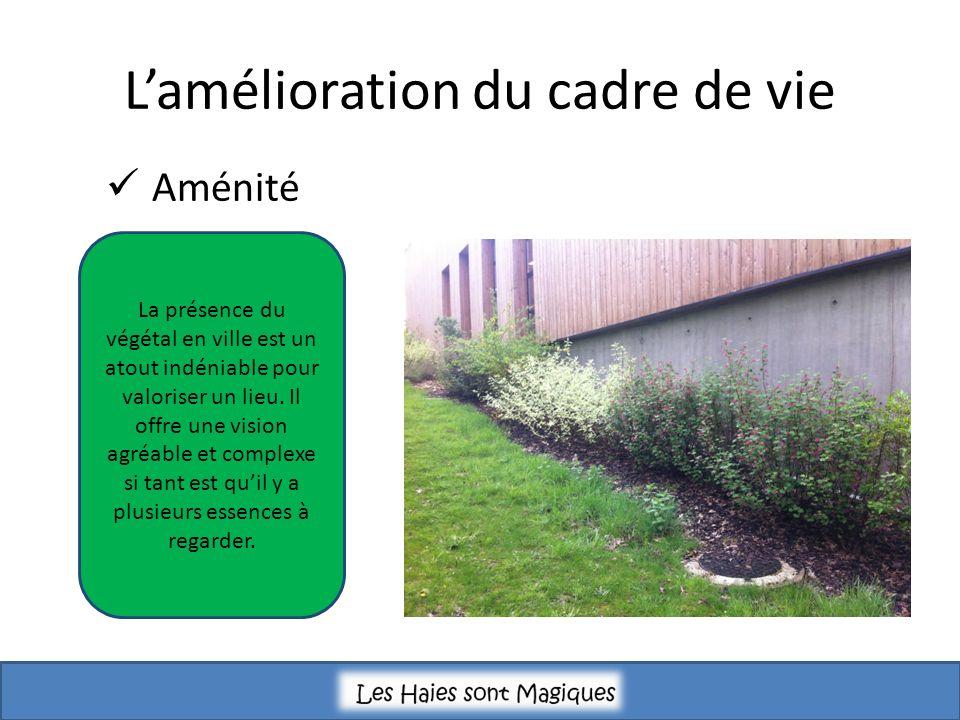 Lamélioration du cadre de vie Aménité La présence du végétal en ville est un atout indéniable pour valoriser un lieu. Il offre une vision agréable et