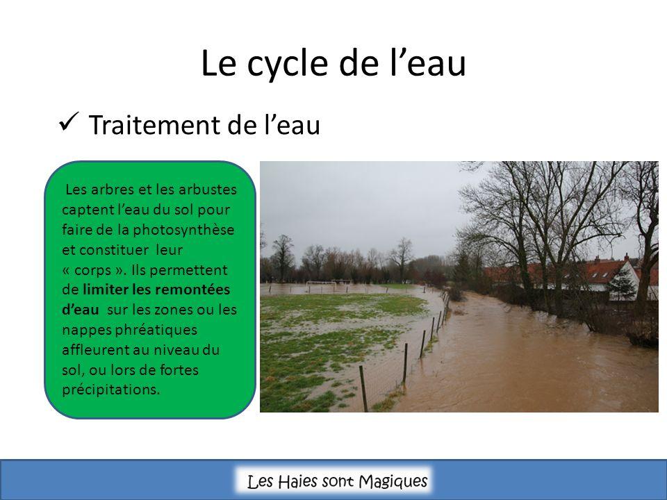 Le cycle de leau Traitement de leau Les arbres et les arbustes captent leau du sol pour faire de la photosynthèse et constituer leur « corps ».