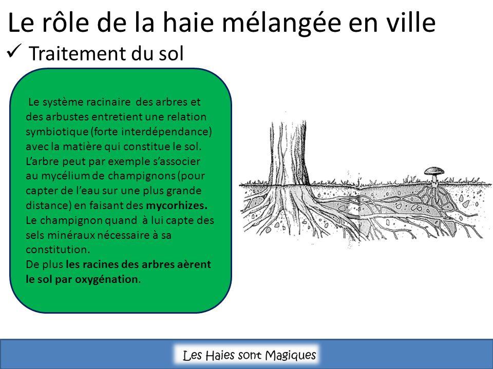Le rôle de la haie mélangée en ville Traitement du sol Le système racinaire des arbres et des arbustes entretient une relation symbiotique (forte interdépendance) avec la matière qui constitue le sol.