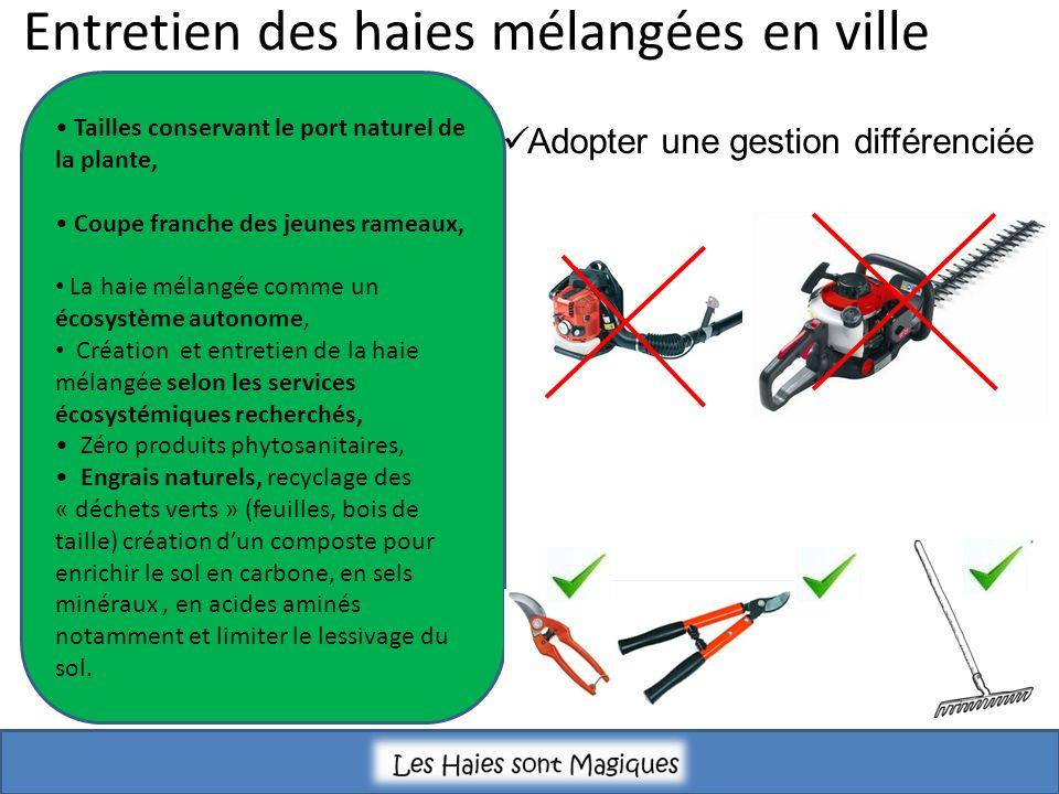 Entretien des haies mélangées en ville Tailles conservant le port naturel de la plante, Coupe franche des jeunes rameaux, La haie mélangée comme un éc