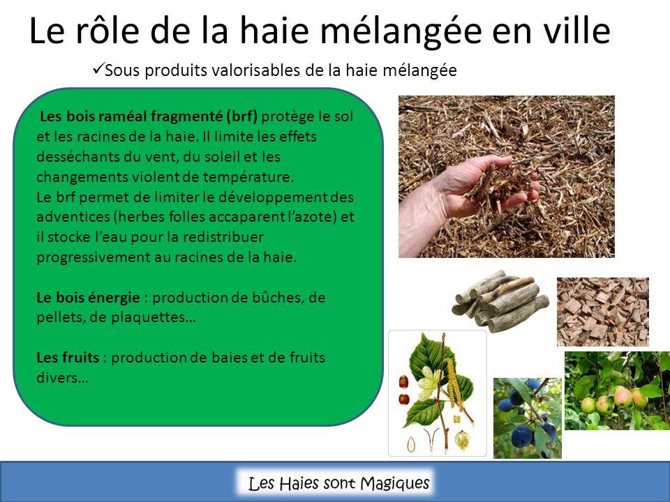 Sous produits valorisables de la haie mélangée Les bois raméal fragmenté (brf) protège le sol et les racines de la haie. Il limite les effets dessécha