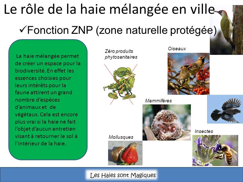 La haie mélangée permet de créer un espace pour la biodiversité. En effet les essences choisies pour leurs intérêts pour la faune attirent un grand no