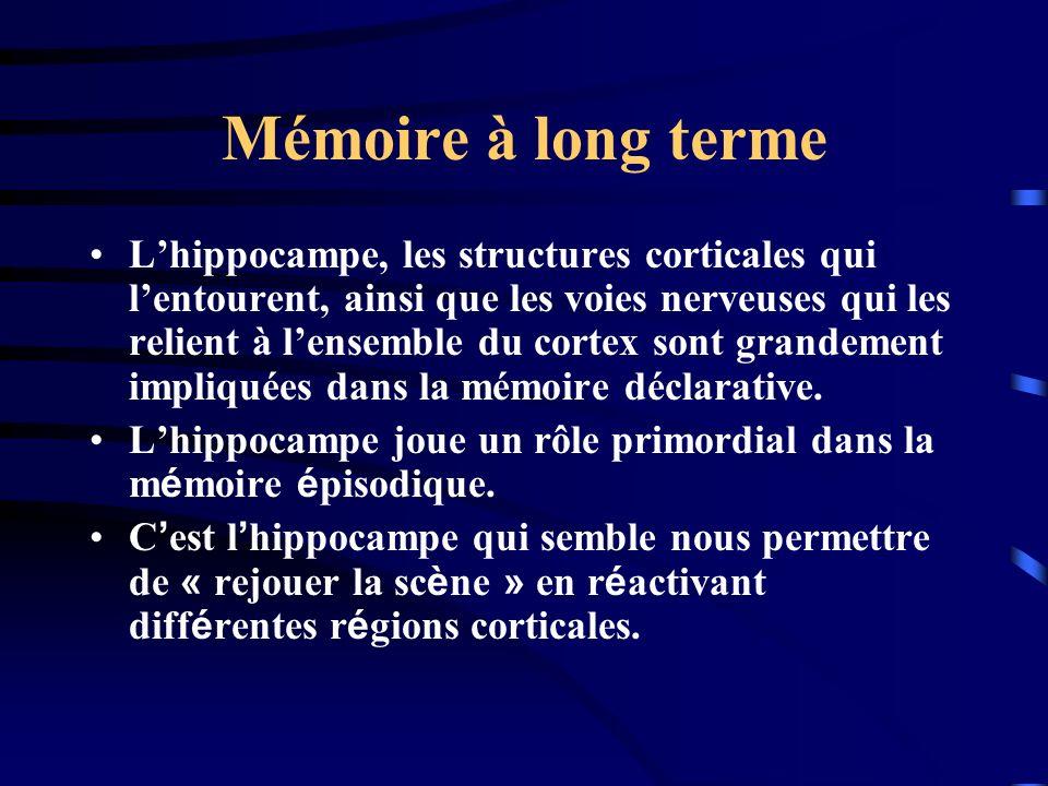 Mémoire à long terme Lhippocampe, les structures corticales qui lentourent, ainsi que les voies nerveuses qui les relient à lensemble du cortex sont g
