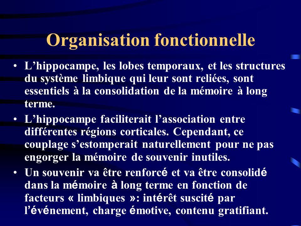Organisation fonctionnelle Lhippocampe, les lobes temporaux, et les structures du système limbique qui leur sont reliées, sont essentiels à la consoli