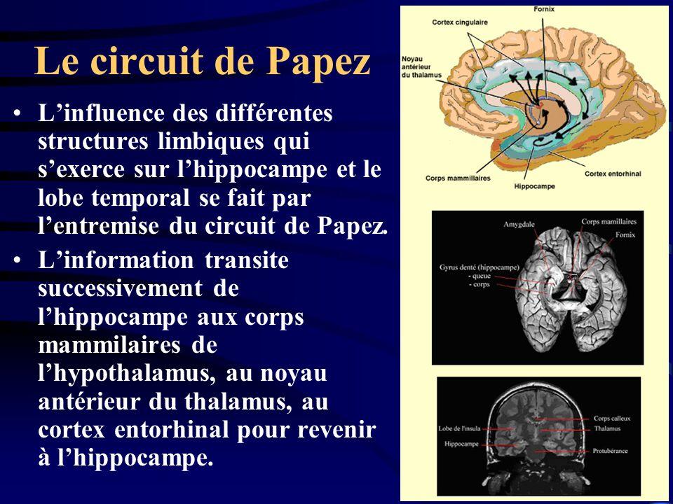 Le circuit de Papez Linfluence des différentes structures limbiques qui sexerce sur lhippocampe et le lobe temporal se fait par lentremise du circuit