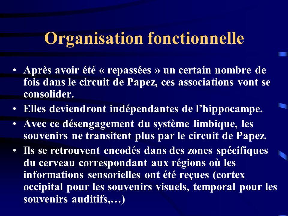 Organisation fonctionnelle Après avoir été « repassées » un certain nombre de fois dans le circuit de Papez, ces associations vont se consolider. Elle